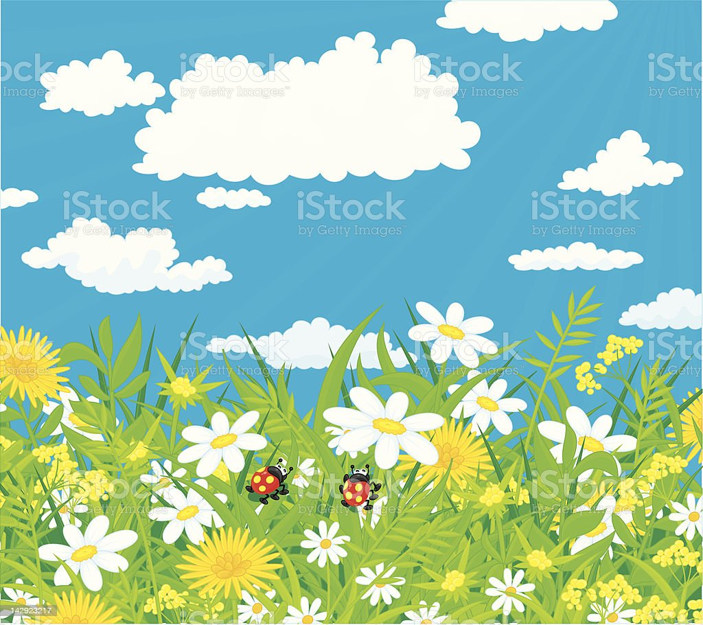 Ladybugs in a field with chamomiles vector art illustration