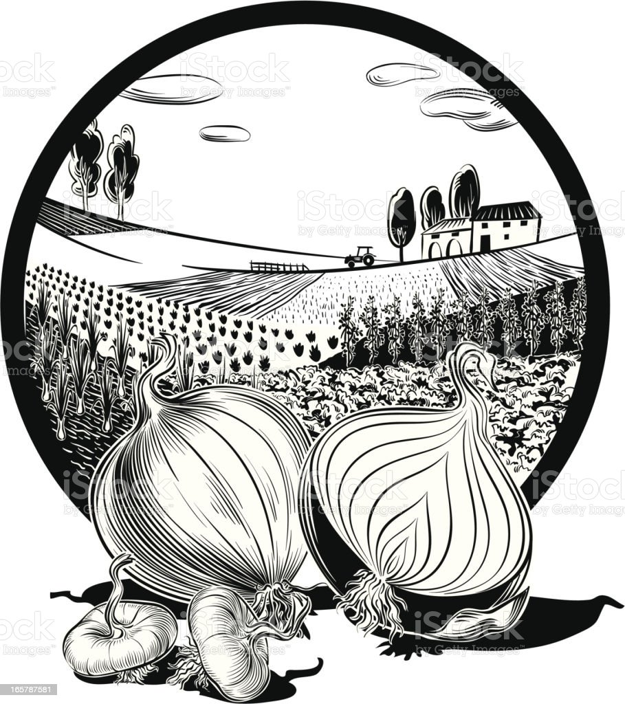 landscape in oval frame and onions royalty-free stock vector art