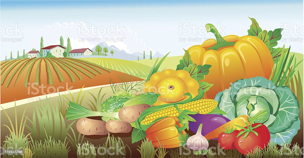 landscape with a group of vegetables royalty-free stock vector art