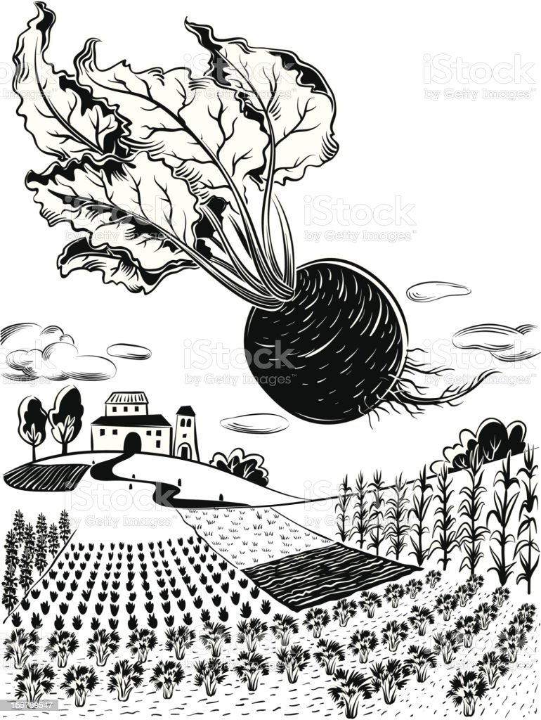 landscape with beetroot royalty-free stock vector art