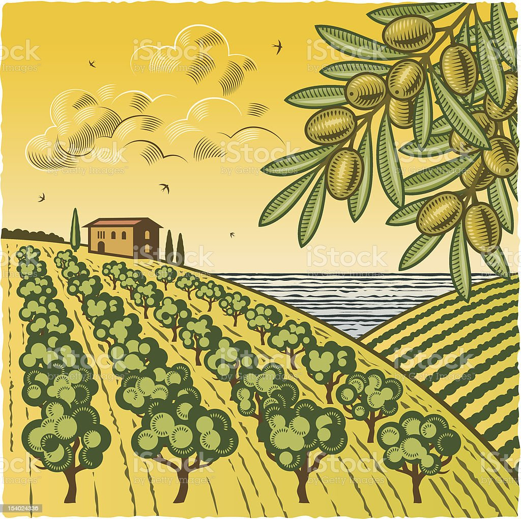Landscape with olive grove royalty-free stock vector art