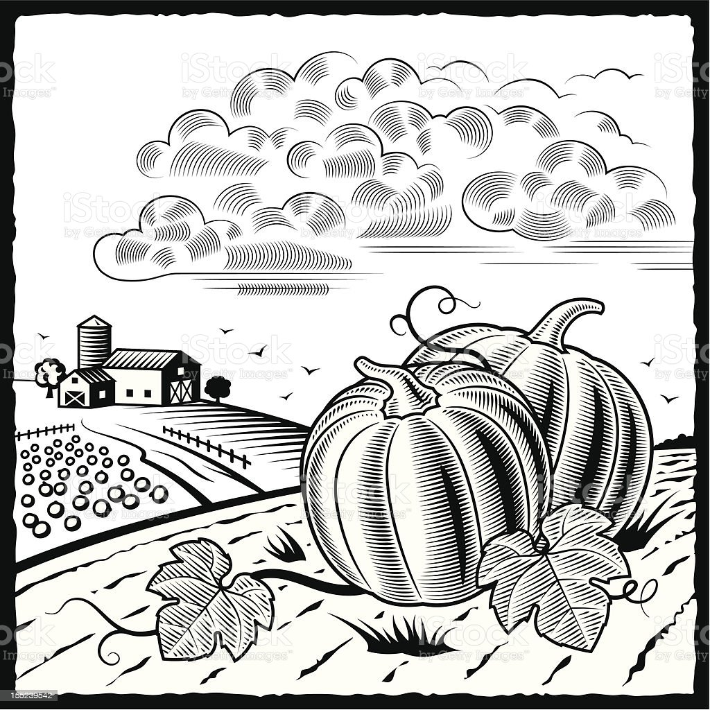 Landscape with pumpkins black and white royalty-free stock vector art