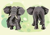 large grey Indian elephant goes forward