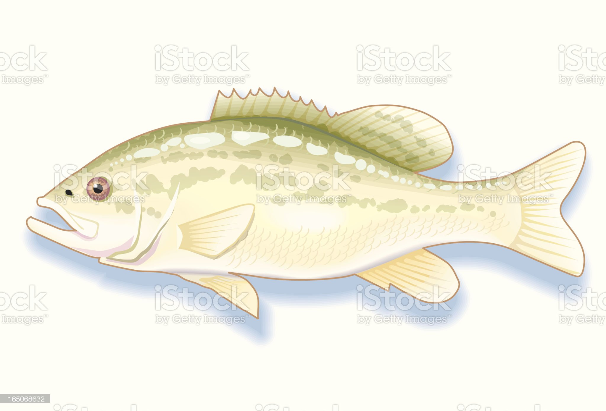 Large Mouth Bass royalty-free stock vector art