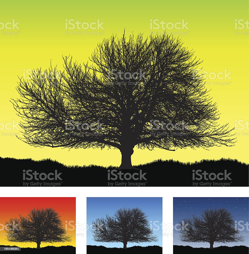 Large old detailed tree silhouette royalty-free stock vector art