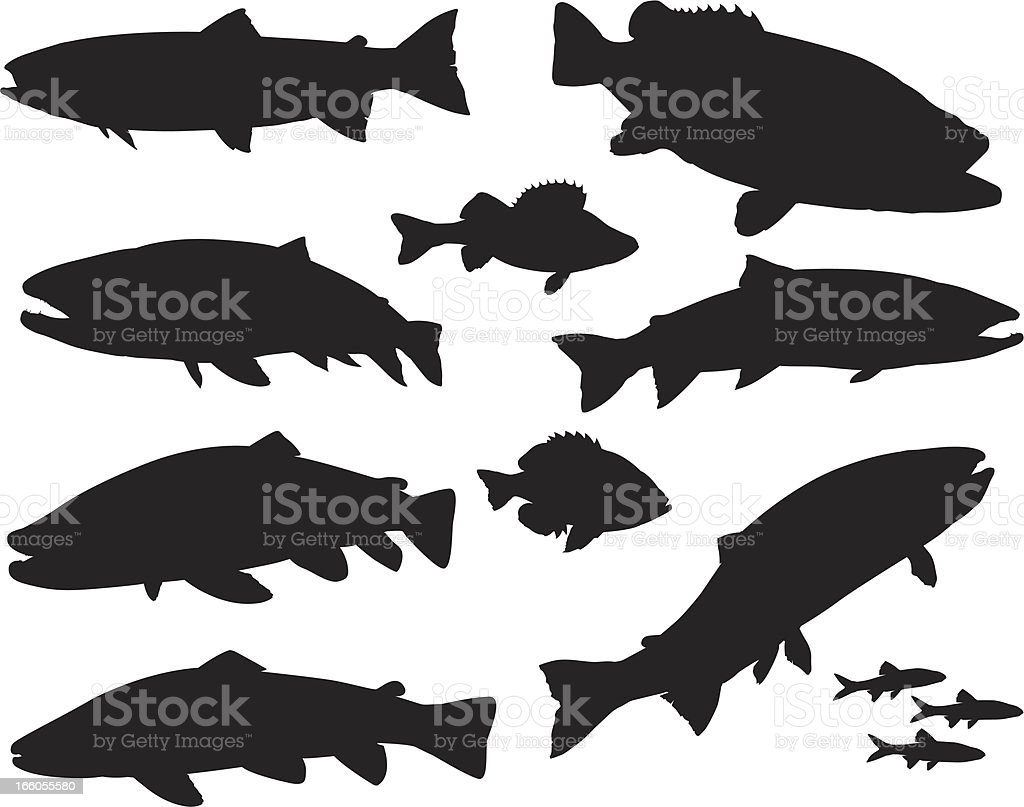 Large Sport Fish Silhouette Set royalty-free stock vector art
