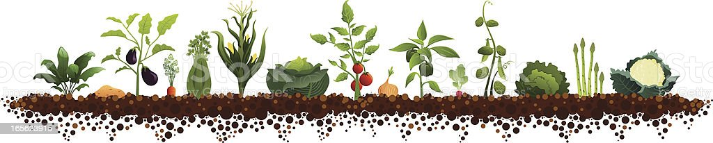Large Vegetable Garden vector art illustration