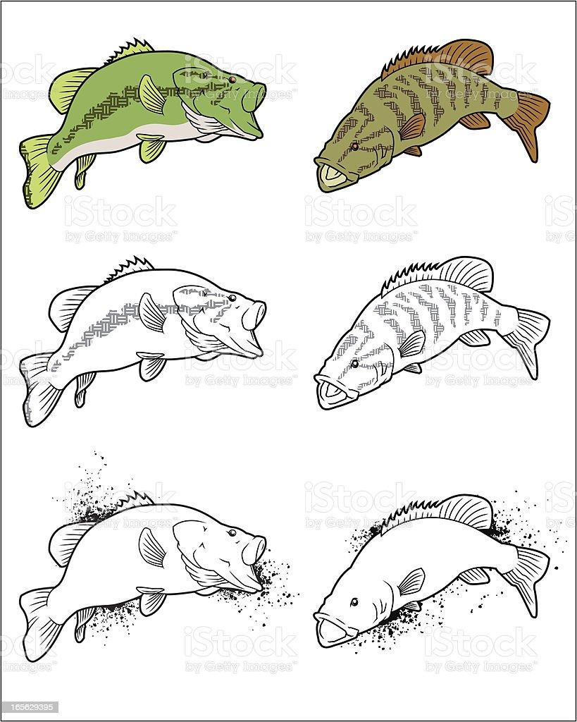 Largemouth and Smallmouth bass vector art illustration