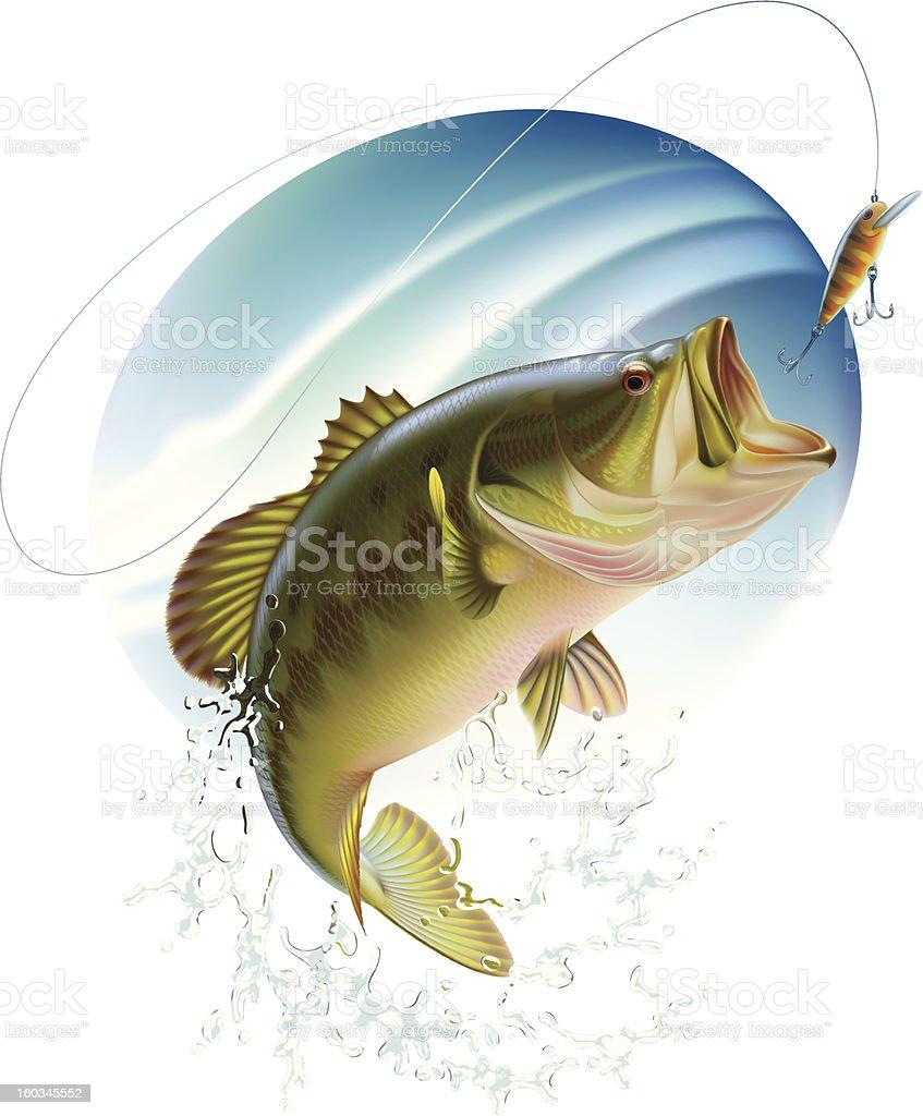 Largemouth bass catching a bait vector art illustration