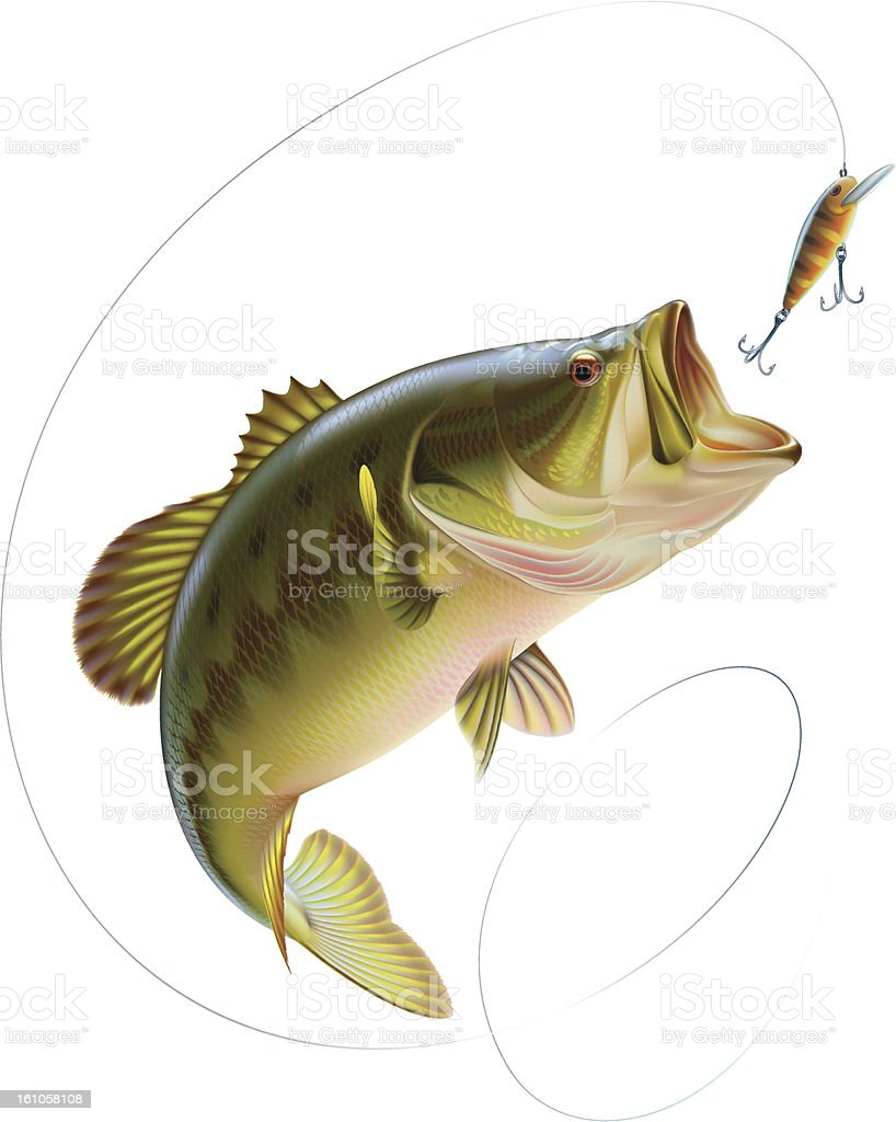 Largemouth bass catching a bait vector art illustration