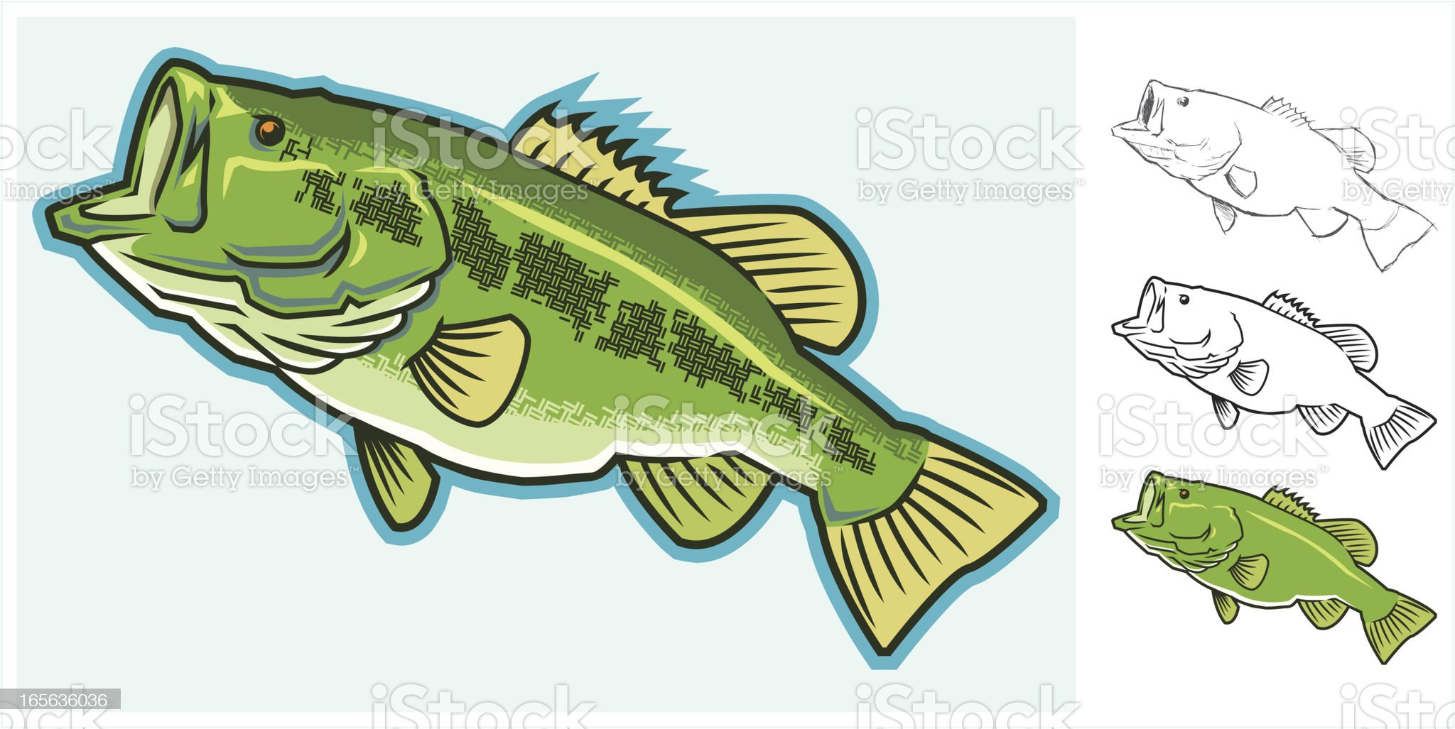 Largemouth Bass - From Sketch to Full Color royalty-free stock vector art