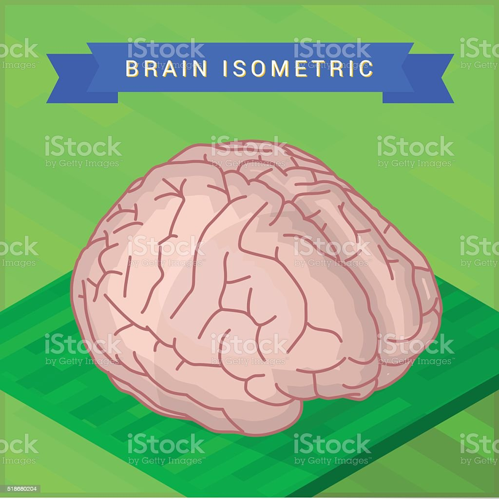 Lateral of human brain flat vector art illustration