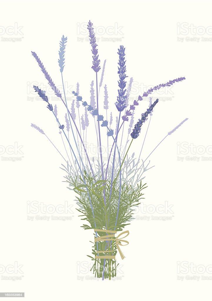 Lavender Boquet-Design Elements royalty-free stock vector art