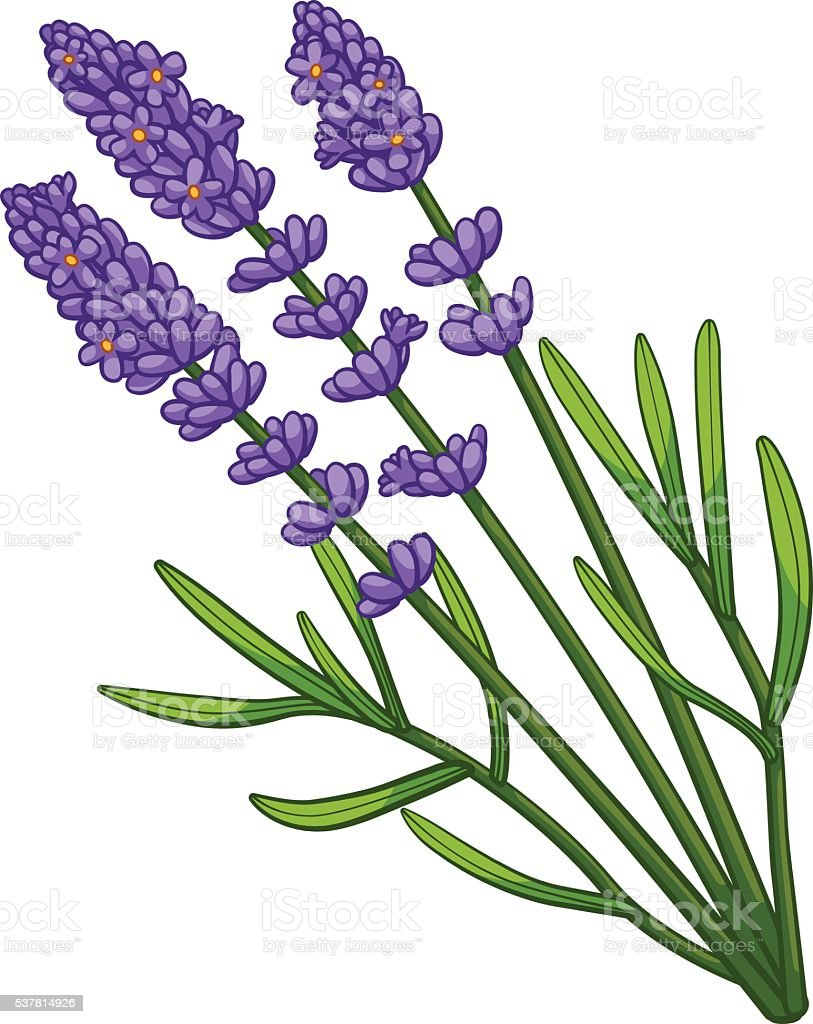 Lavender cartoon style royalty-free stock vector art