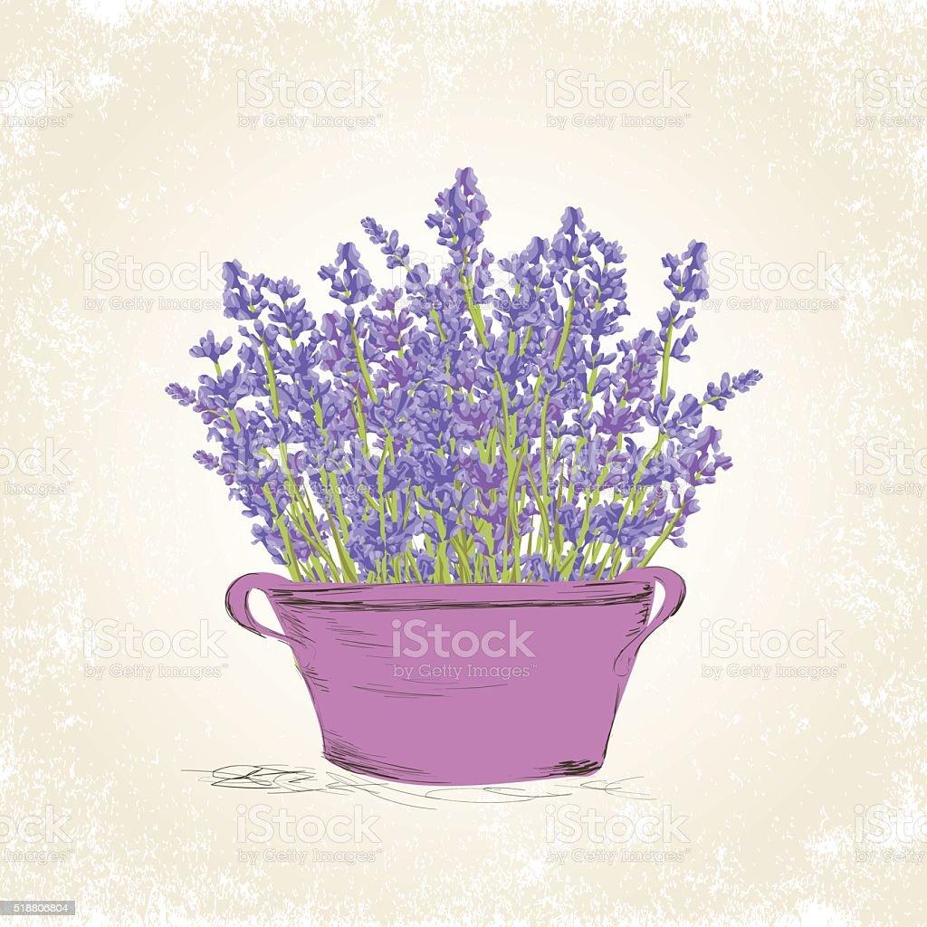 Lavender in the pot vector art illustration