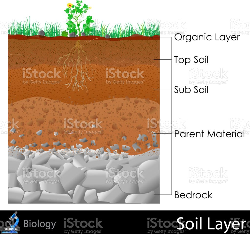 Layer of Soil vector art illustration