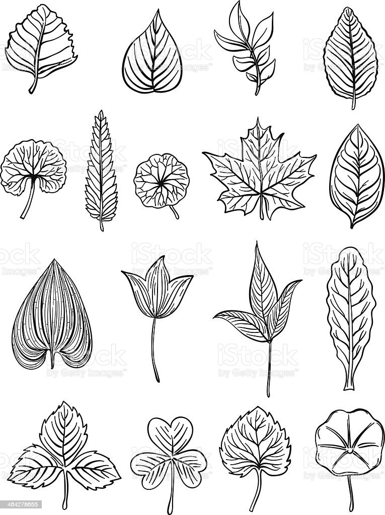 Leaf collection in Black and White - Illustration royalty-free stock vector art