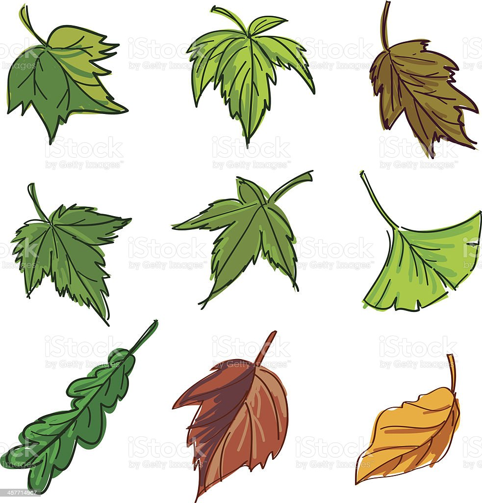 Leaf collection in colour vector art illustration