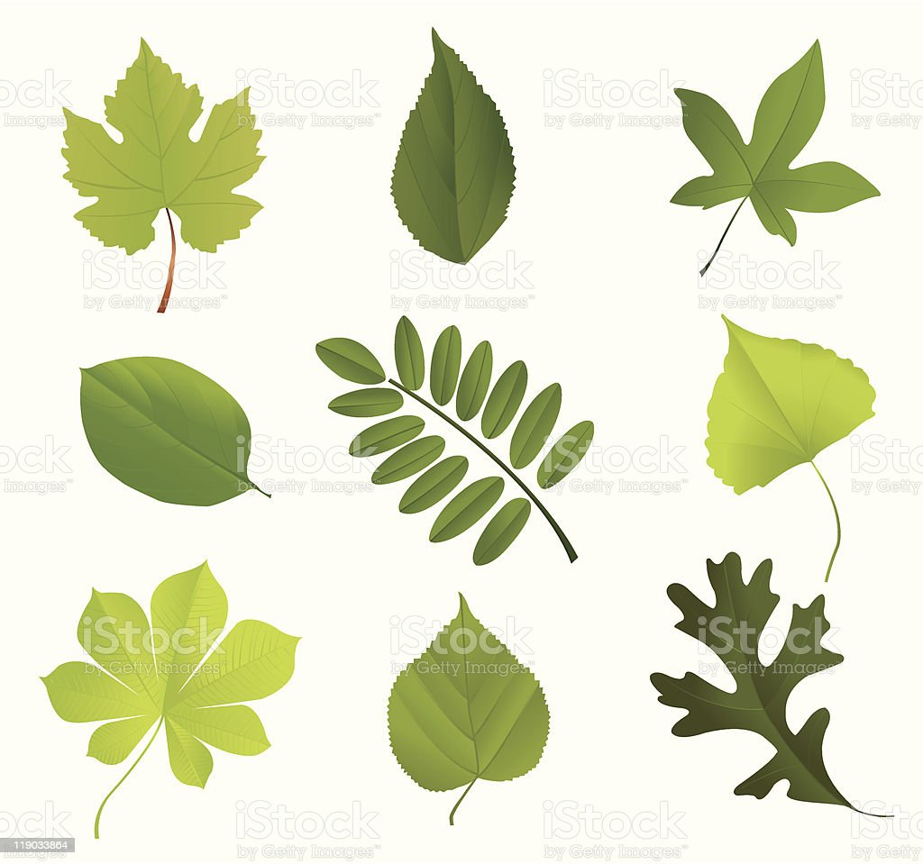 Leaf collection vector art illustration