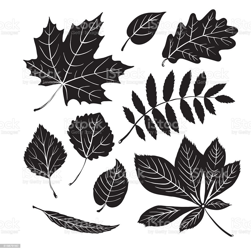 Leaf collection - vector silhouette vector art illustration