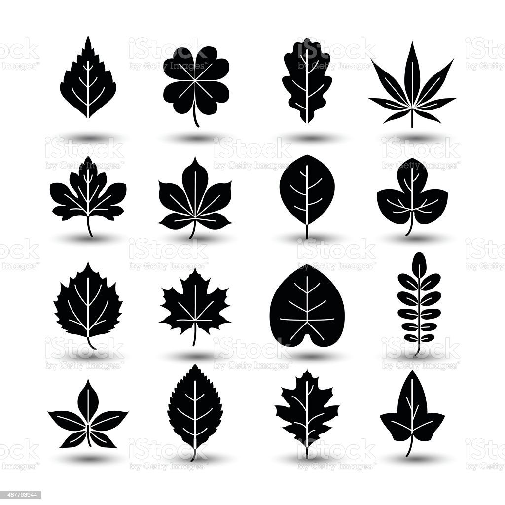 leaf icon vector art illustration