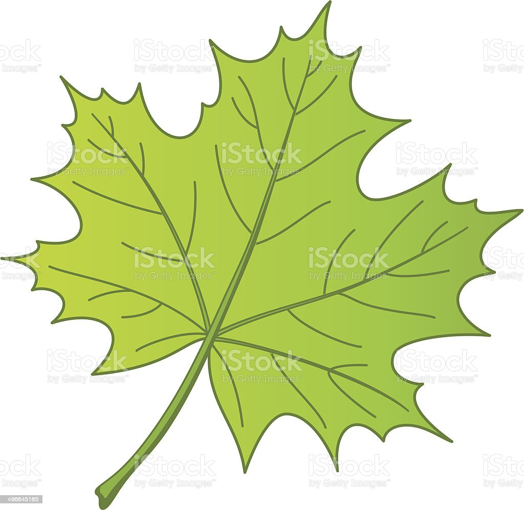 Leaf of a maple, vector royalty-free stock vector art