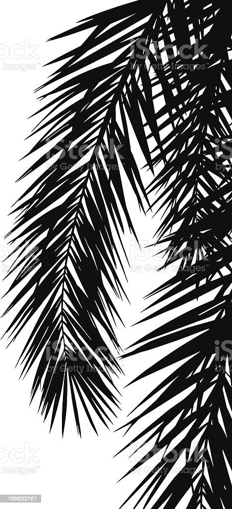 Leaf of palm tree royalty-free stock vector art