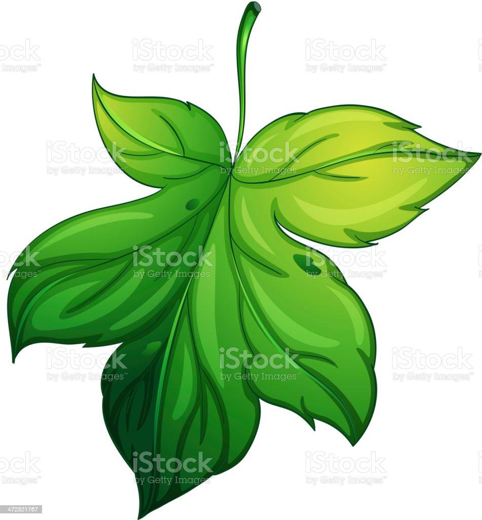 Leaf on white royalty-free stock vector art