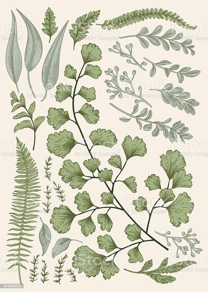 Leaf set. vector art illustration