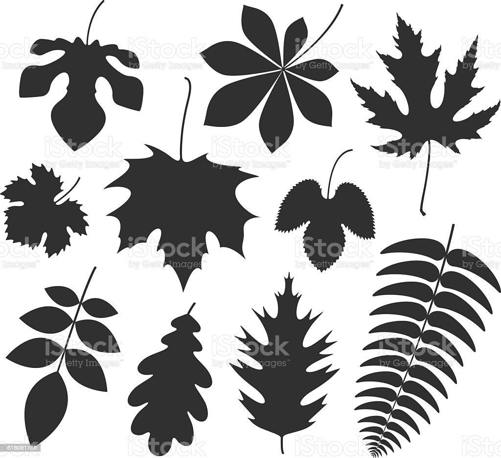 Leaf. Silhouette vector art illustration