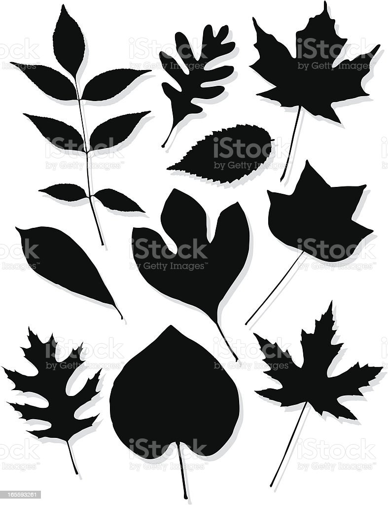 Leaf silhouettes of the central US royalty-free stock vector art