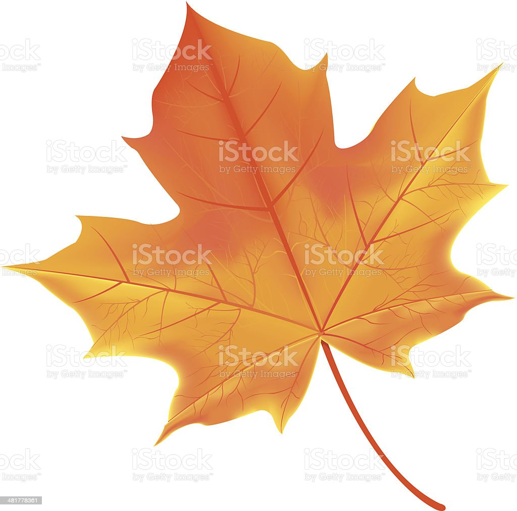 leaf vector art illustration