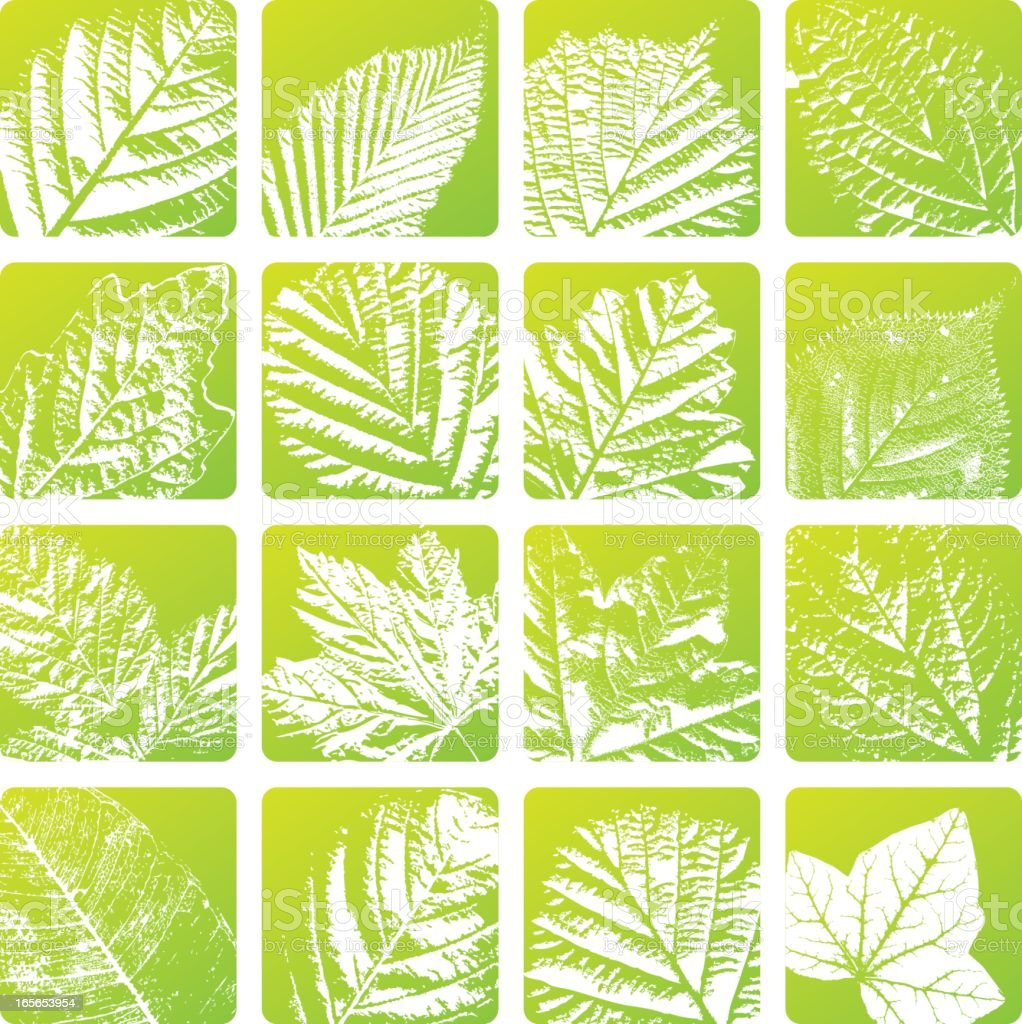 Leaf Vein Green Eco Labels Set royalty-free stock vector art
