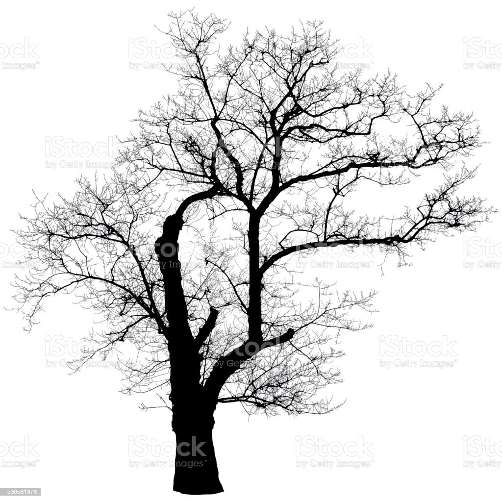 Leafless tree shape vector art illustration