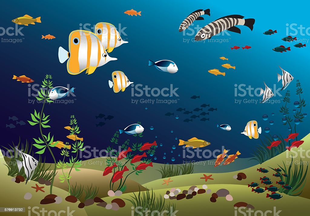 Leaflet width tropical fishes bottom of the ocean vector art illustration