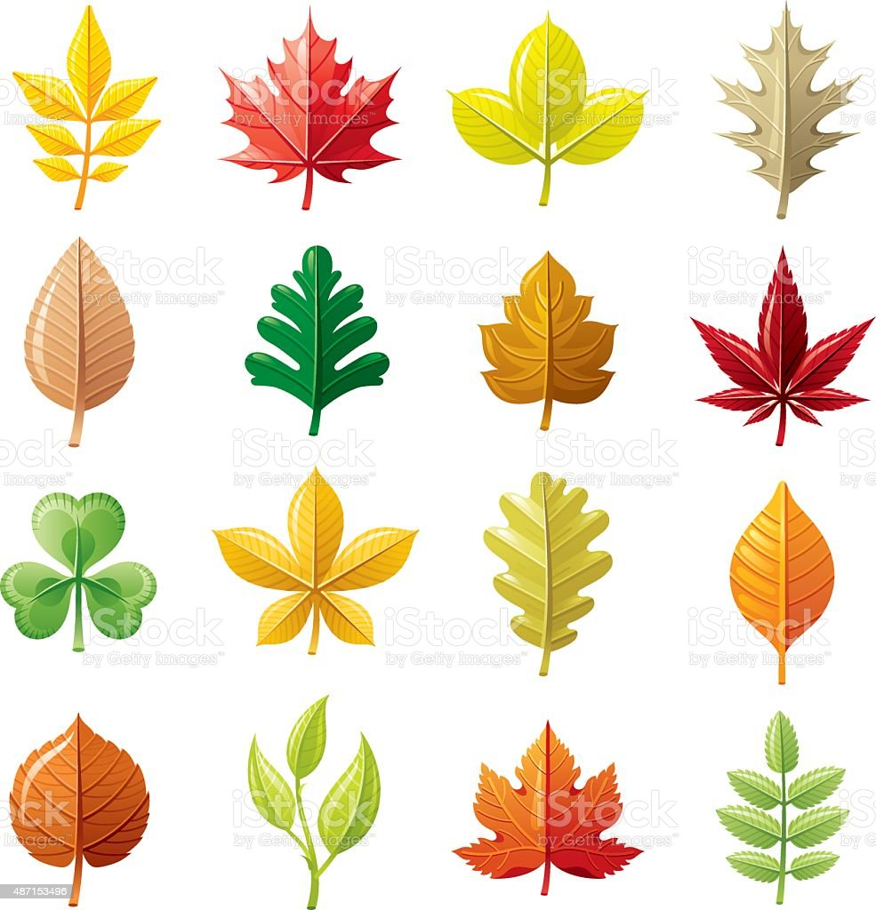 Leafs icon set vector art illustration