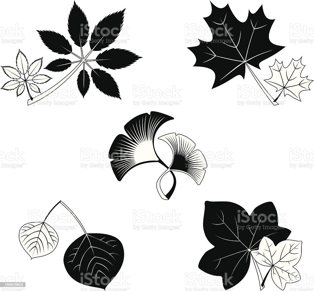 leafs royalty-free stock vector art