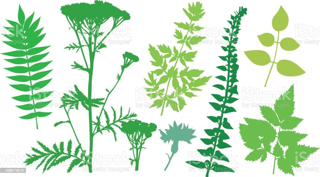Leafshapes_0030 royalty-free stock photo