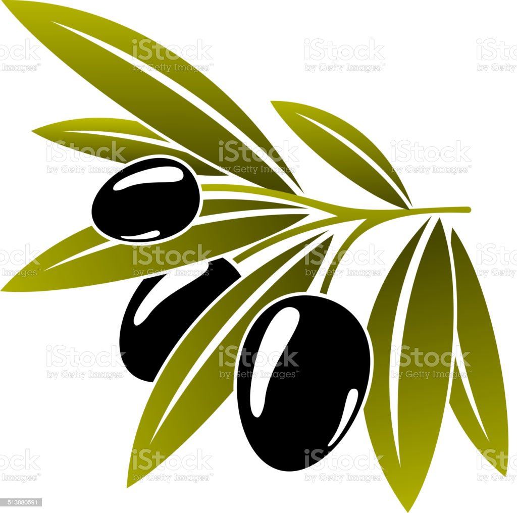 Leafy green twig with ripe black olives vector art illustration