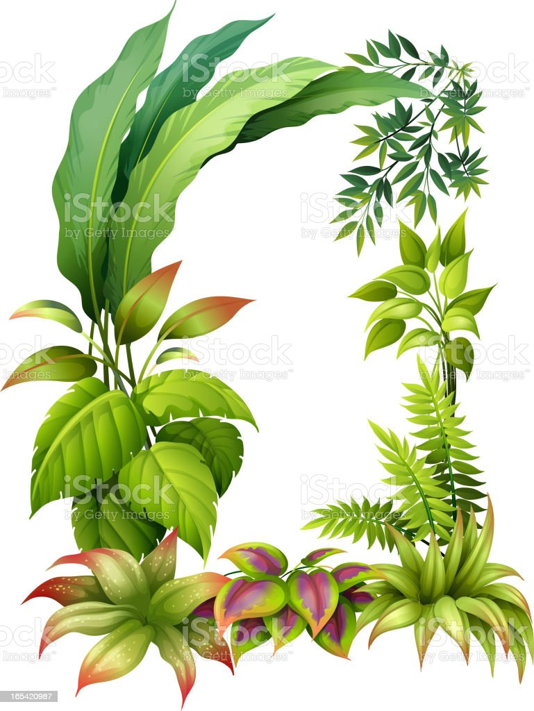 Leafy plants royalty-free stock vector art