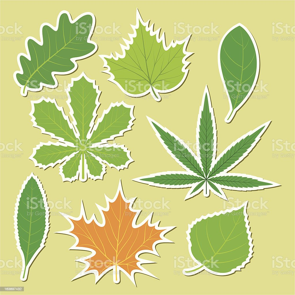 Leaves of different plants royalty-free stock vector art