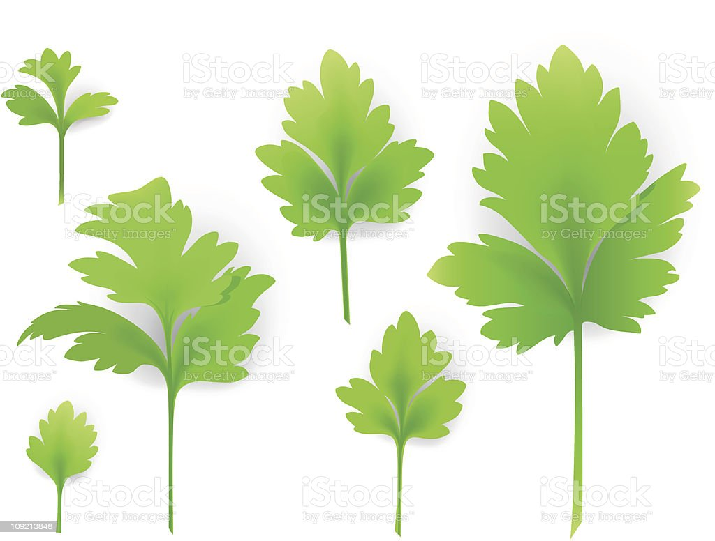 Leaves of parsley royalty-free stock vector art