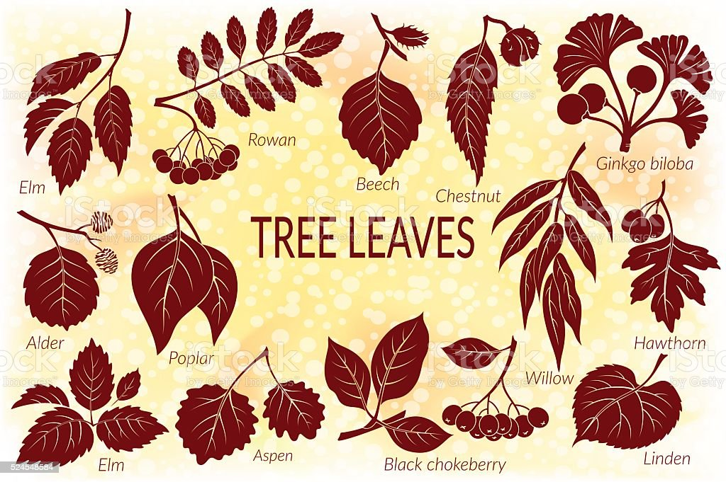 Leaves of Plants Pictogram Set vector art illustration