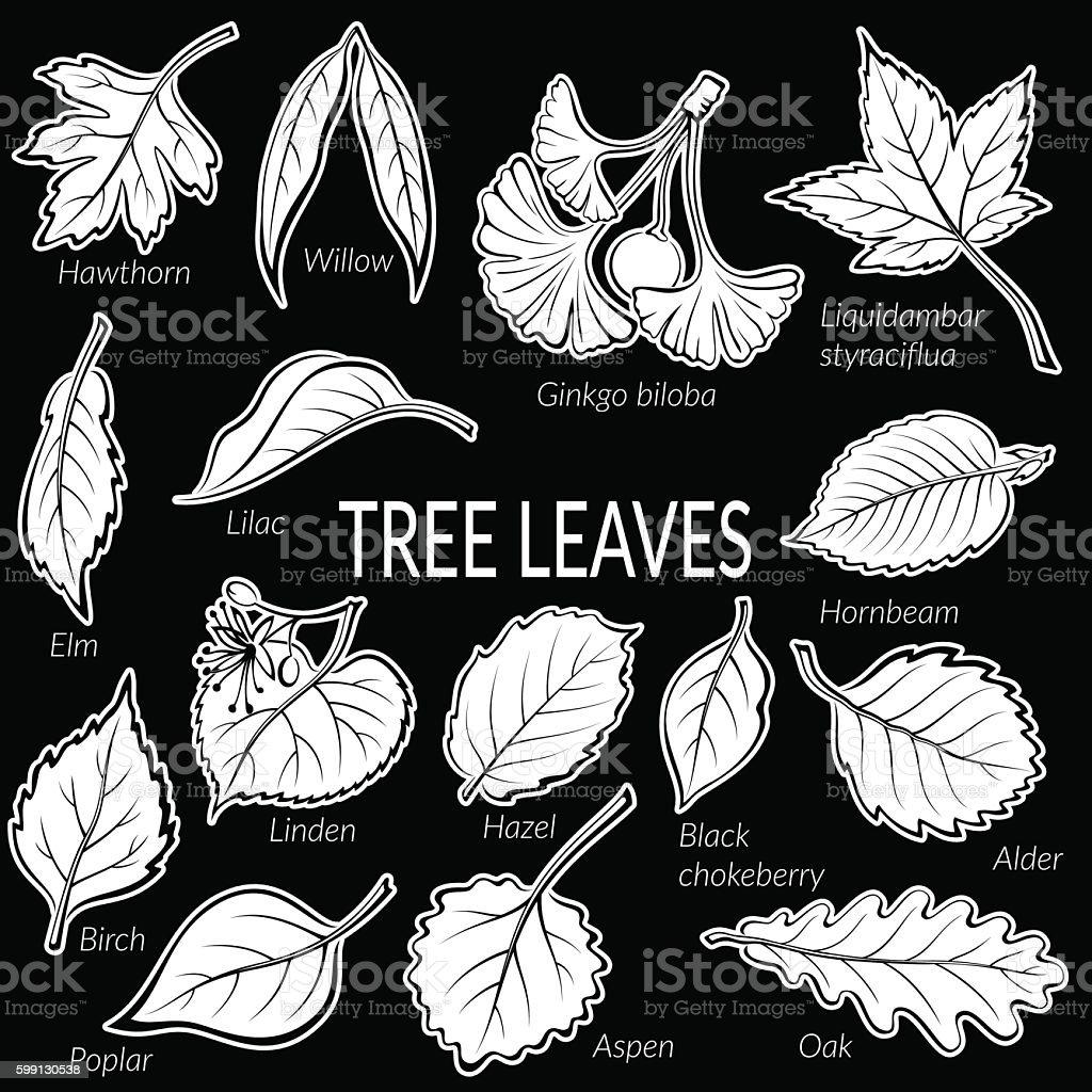 Leaves of Plants Pictogram Set vector art illustration