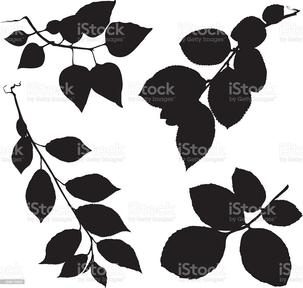 leaves on branches royalty-free stock photo
