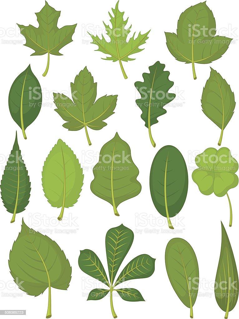 Leaves Set - Green Leaves vector art illustration
