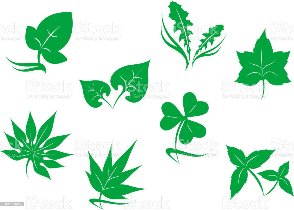 Leaves symbols royalty-free stock vector art