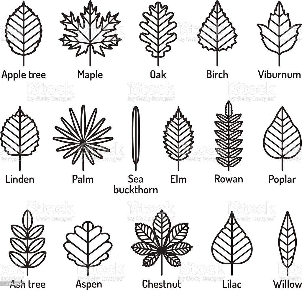 Leaves types with names icons vector set. Outline black icons. vector art illustration