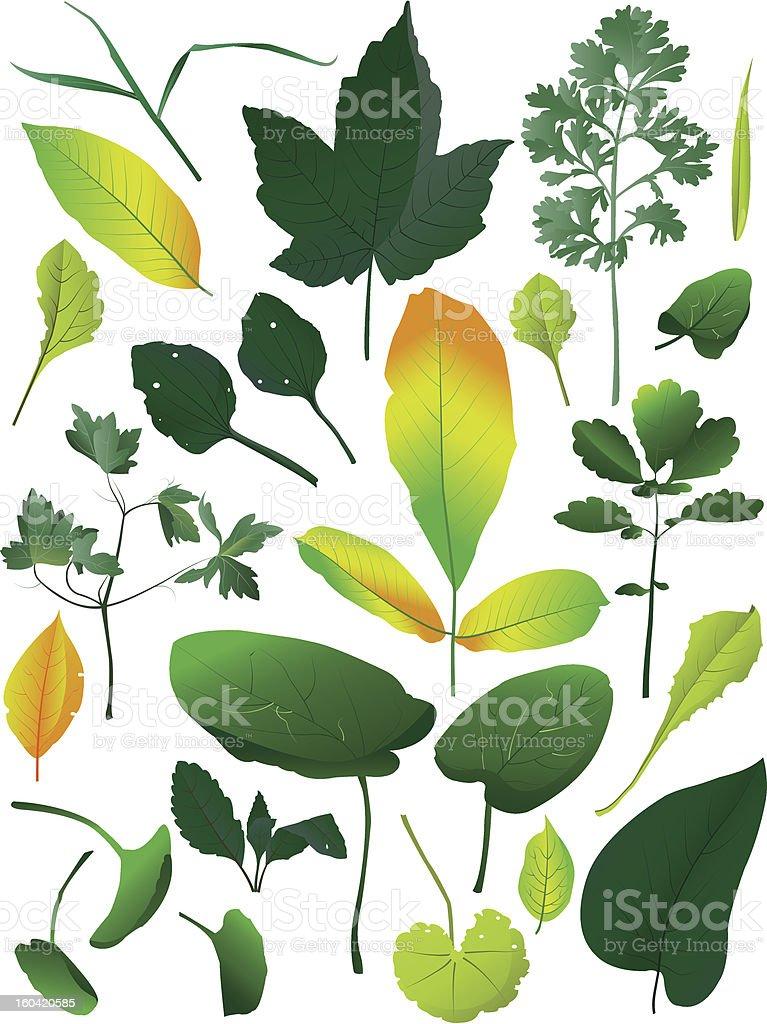 Leaves royalty-free stock vector art