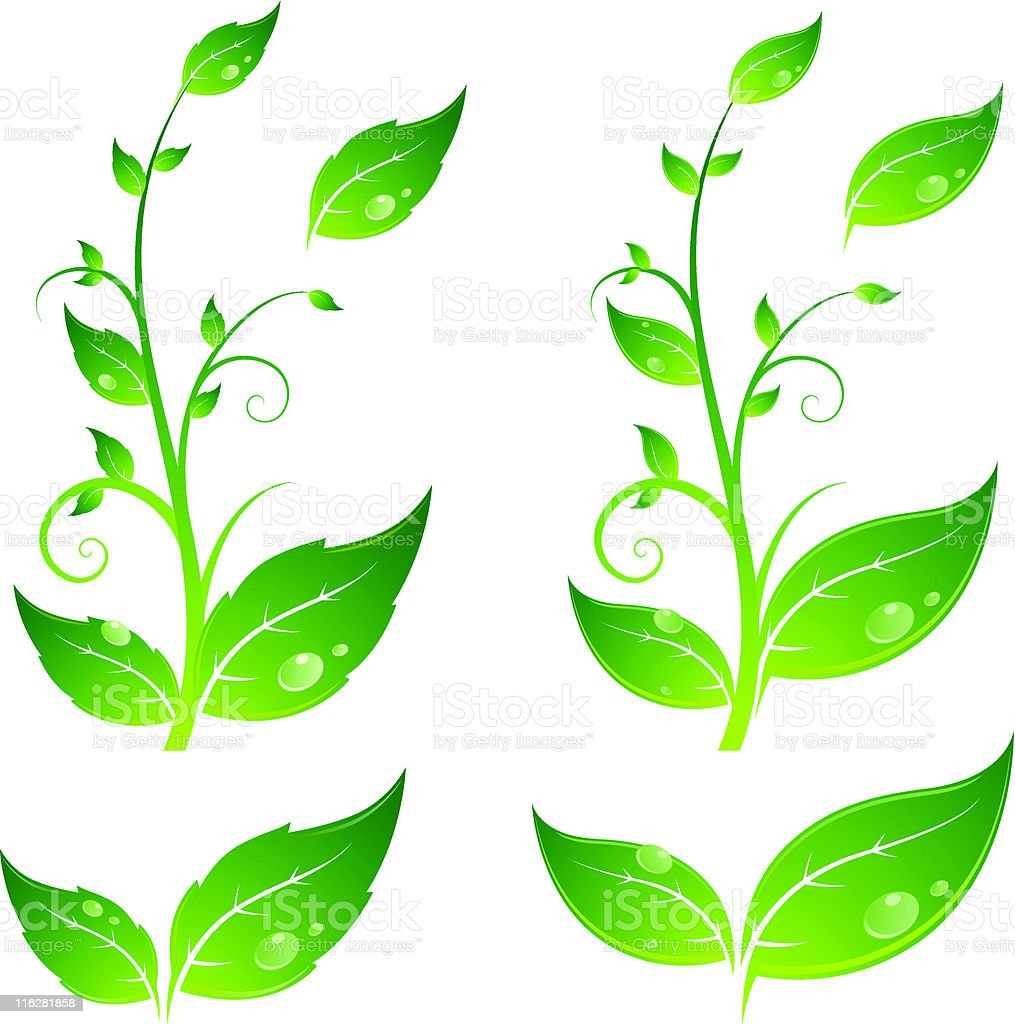 Leaves with water drops royalty-free stock vector art